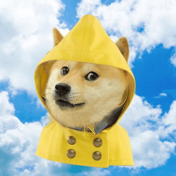 Pies niebo pogoda deszcz