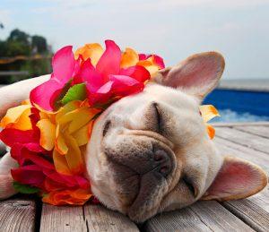 Wakacje pies kwiaty